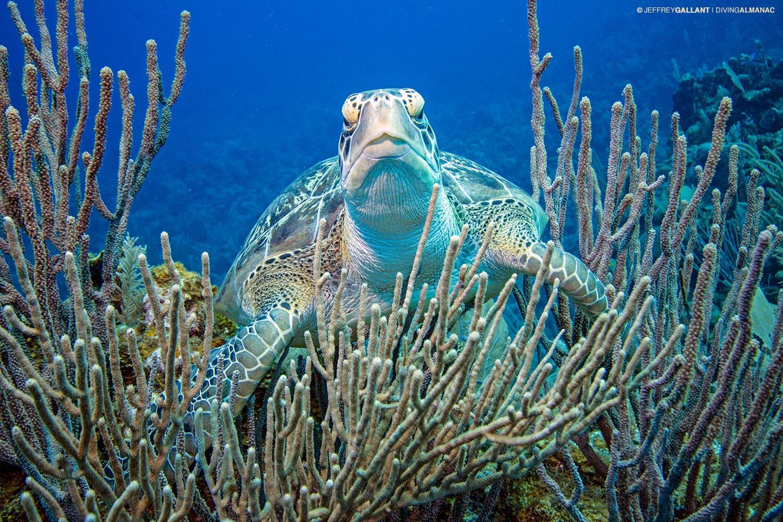 Largest barrier reefs