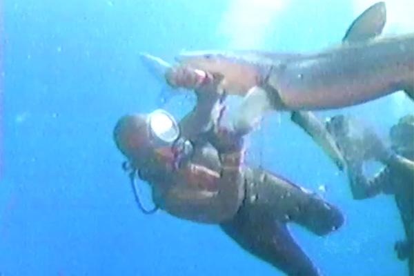 First shark observation suit