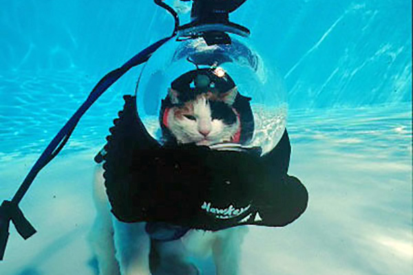 Cat on scuba